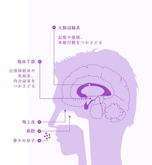 自律神経系やホルモン分泌にも働きかける香りの力。